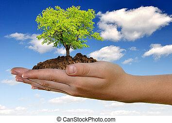 växande, hand, träd