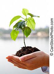 växande, växt