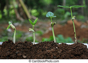 växt, growth-stages, växande, planterar