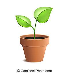 växt kruka, ung, isolerat, vektor, grön, backgrounds., vit