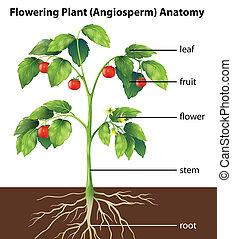 växt, särar