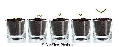 växt, utveckling