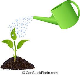 växt, vattning, grön, ung, kan