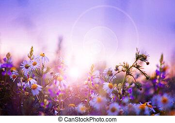 vår blommar, fält