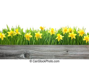 vår blommar, påskliljor