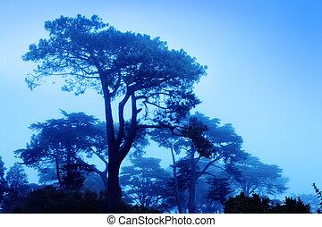 vacker, dimmig, träd, morgon