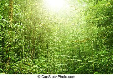 vacker, tropical skog