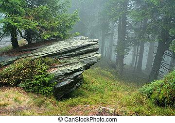 vagga, skog, mist
