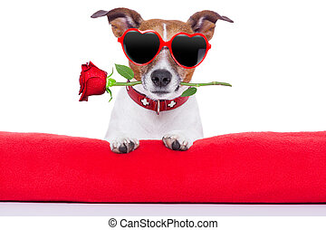 valentinkort, hund, dag
