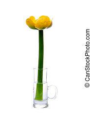 vatten, blomma, lilja, gul