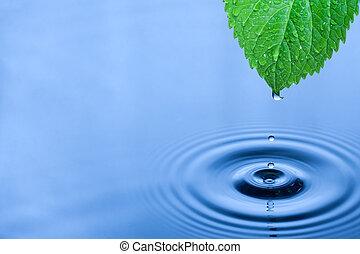 vatten, grön, droppar, blad