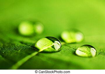 vatten, makro, droppar, blad