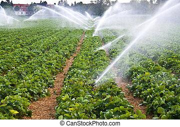 vatten spruta, lantbruk