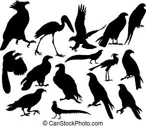 vektor, fåglar