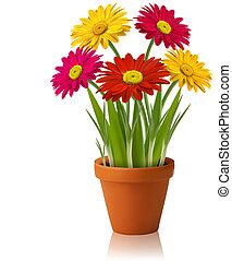 vektor, fjäder, färska blomstrar, färg