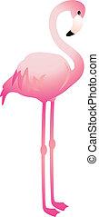 vektor, flamingo