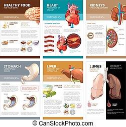 vektor, mänsklig, infographic., kartlägga, diagram, inre, mall, broschyr, organs