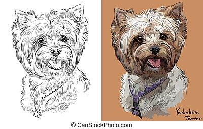 vektor, monokrom, stående, teckning, yorkshire, hand, färgrik, terrier