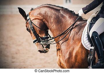 vik bygelhäst, klätt, stående, ammunition, dressyr