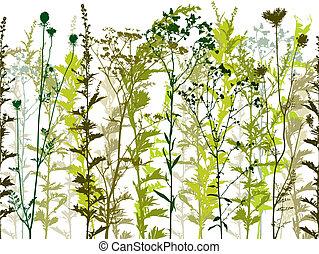 vild, planterar, naturlig, weeds.