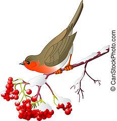 vinter, fågel