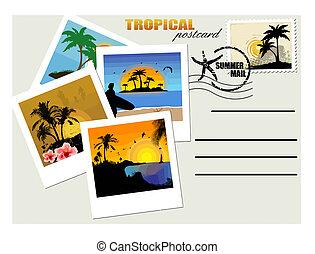 vykort, tropisk