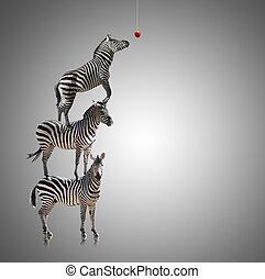 zebra, stack, äpple, äta, nå