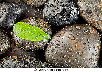 zen, freshplant, stenar, droppar, vatten